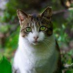 猫がキュウリに驚くのは、なぜ? キュウリは天敵?