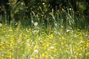 花粉症の季節1